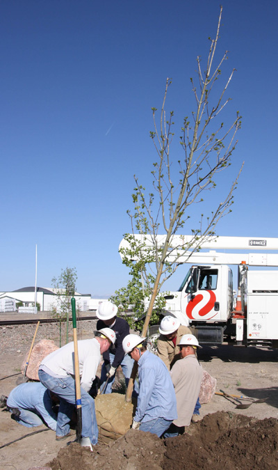 Xcel employees plant tree